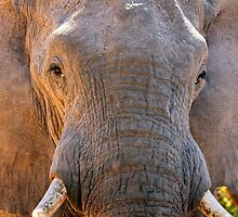 Another Close Encounter by Jennifer Sumpton