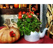 Teapot Filled With Geraniums Photographic Print