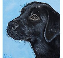 Black Labrador Puppy Photographic Print