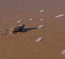 The Treacherous Path to the Sea by Kristin Repsher