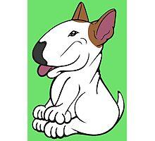 Mini Bull Terrier Lola  Photographic Print