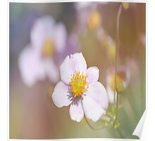 Anemones in the Garden, #flower, #floral, #nature Poster