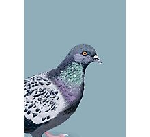 Pigeon Illustration Photographic Print
