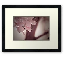 Tinted Pink Framed Print