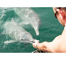 Hand Feeding the Dolphins Photographic Print