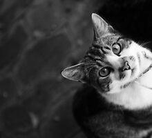 Pretty Kitty by Kristin Repsher