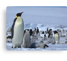 Emperor Penguin and Chicks - Snow Hill Island  Canvas Print