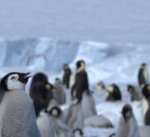 Emperor Penguin and Chicks - Snow Hill Island  Sticker