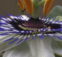 Side View of Beautiful Passiflora Flower Sticker