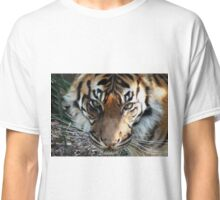 TIGER-ADELAIDE ZOO Classic T-Shirt