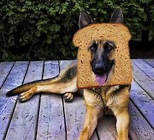 HUMOUR DOG PICTURE>>GERMAN SHEPARD ...INBRED...PICTURE AND OR CARD ECT. by ✿✿ Bonita ✿✿ ђєℓℓσ