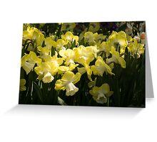 Sunny Daffodil Garden - Enjoying the Beauty of Spring Greeting Card