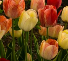 Multicolored Tulips - Enjoying the Beauty of Spring Sticker