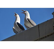 Seagulls in Norway Photographic Print