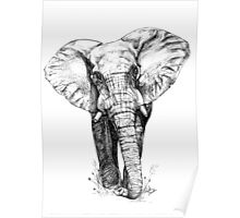 Majestic Elephant - Big 5 Series Poster
