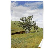 Country Fields, South Australia Poster