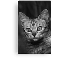 """Chat - Cat """" Peluche """" 03 (c)(h) ) by Olao-Olavia / Okaio Créations 300mm f.2.8 canon eos 5 1989  Canvas Print"""