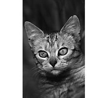 """Chat - Cat """" Peluche """" 03 (c)(h) ) by Olao-Olavia / Okaio Créations 300mm f.2.8 canon eos 5 1989  Photographic Print"""