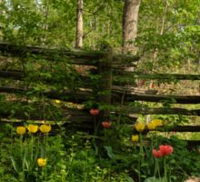 Colorful Tulips and a Rustic Fence - Enjoying the Beauty of Spring Sticker