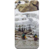 Mallards Swim By Icicles iPhone Case/Skin
