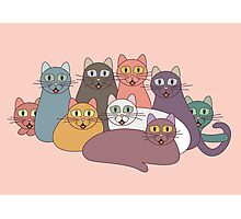 NINE CATS WITH NINE LIVES = ? Photographic Print