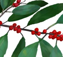 Winterberry | Ilex verticillata Sticker