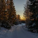 Winter road by Mark Williams