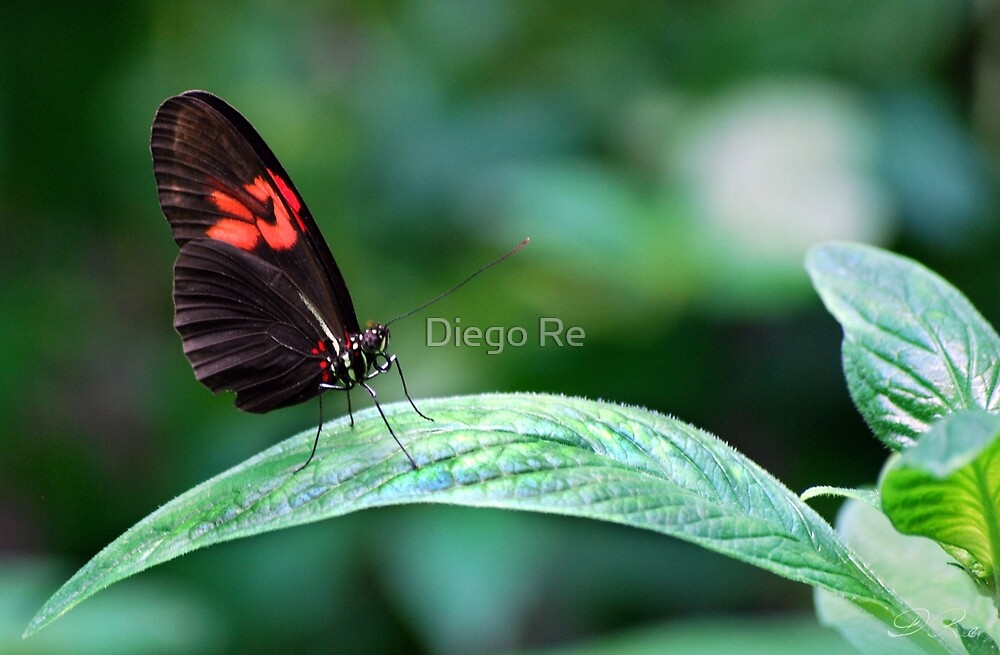 Red And Black On Leaf by Diego Re