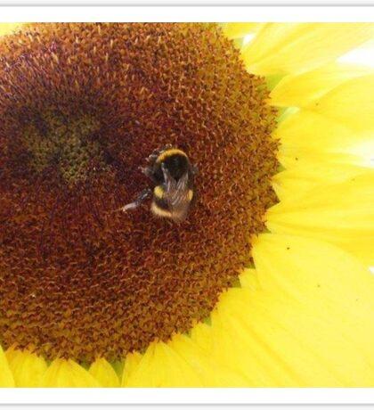 Summers nectar  Sticker