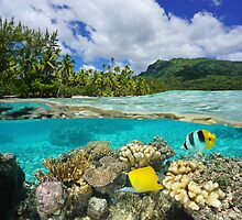 Above and below surface lagoon French Polynesia by Dam - www.seaphotoart.com
