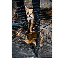 Wild cat Photographic Print