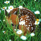 Fawn & Wildflowers by William C. Gladish