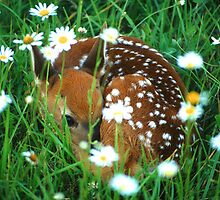 Fawn & Wildflowers by William C. Gladish