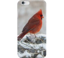 Cardinal on Fence iPhone Case/Skin