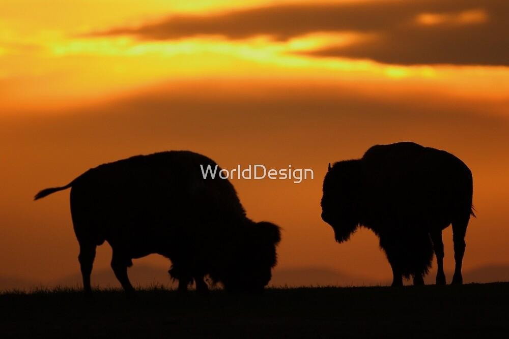 Bison Sunset by William C. Gladish