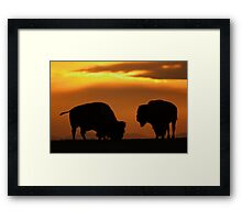Bison Sunset Framed Print