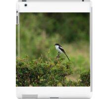 Common Fiscal on Masai Mara iPad Case/Skin