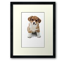 Puppy Framed Print