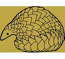 Save the Pangolins Photographic Print