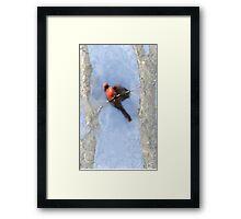 Water Color Cardinal Framed Print