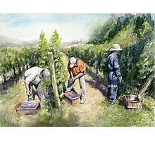 Vineyard Watercolor Painting Photographic Print