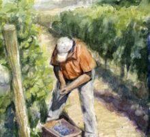 Vineyard Watercolor Painting Sticker