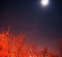 Starfield by coffy