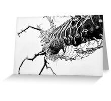 Frozen in time. Greeting Card