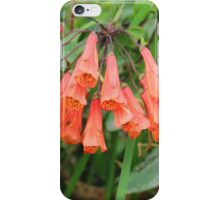 Small Red Trumpet Flowers iPhone Case/Skin