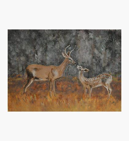 Deer Kiss Photographic Print