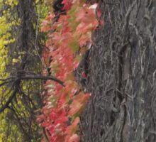 Harsimus Branch Embankment, Autumn Colors, Former Pennsylvania Railroad Embankment, Jersey City, New Jersey Sticker