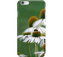 Coneflowers in Bloom iPhone Case/Skin