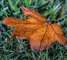 Fallen Leaf by Heather Friedman