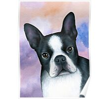 Dog 128 Boston Terrier Poster